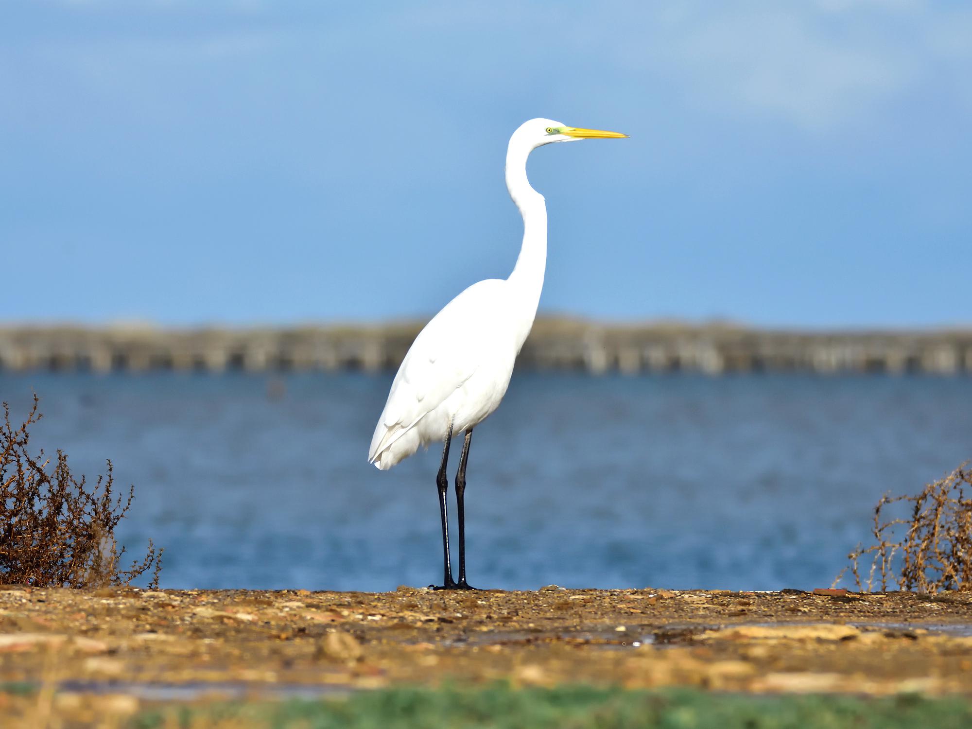 Birdwatching at Comporta